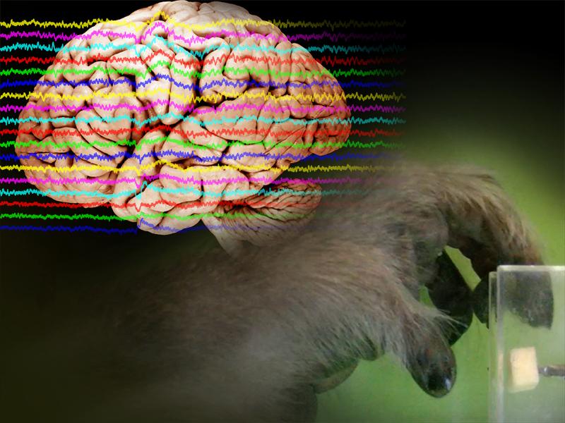 霊長類において動機付け行動に関わる投射経路の機能を解明