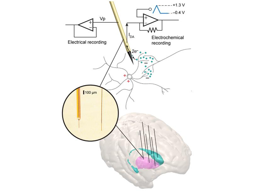 価値と運動を表す脳の化学信号を線条体で発見