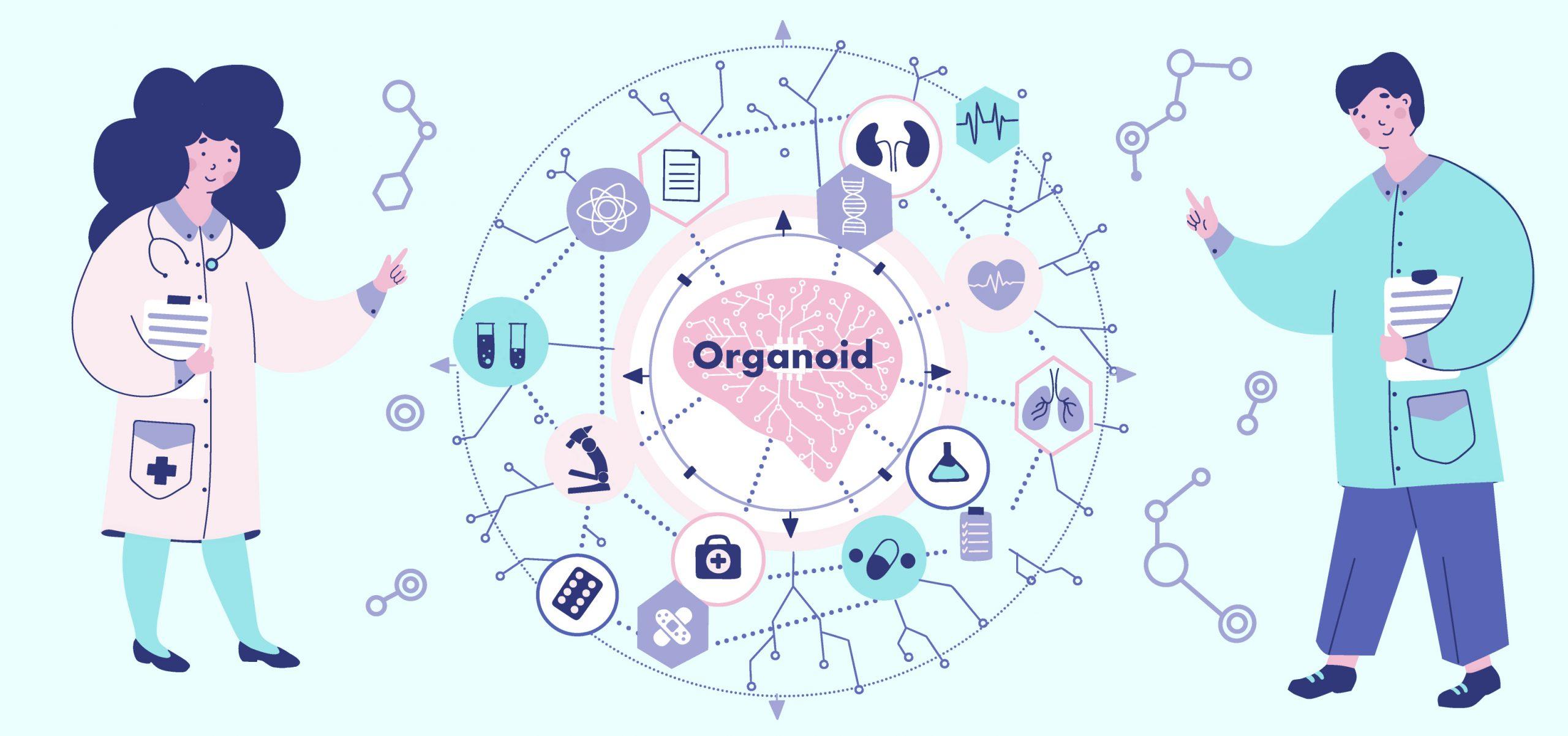 脳オルガノイドの研究と臨床応用での倫理問題を体系化